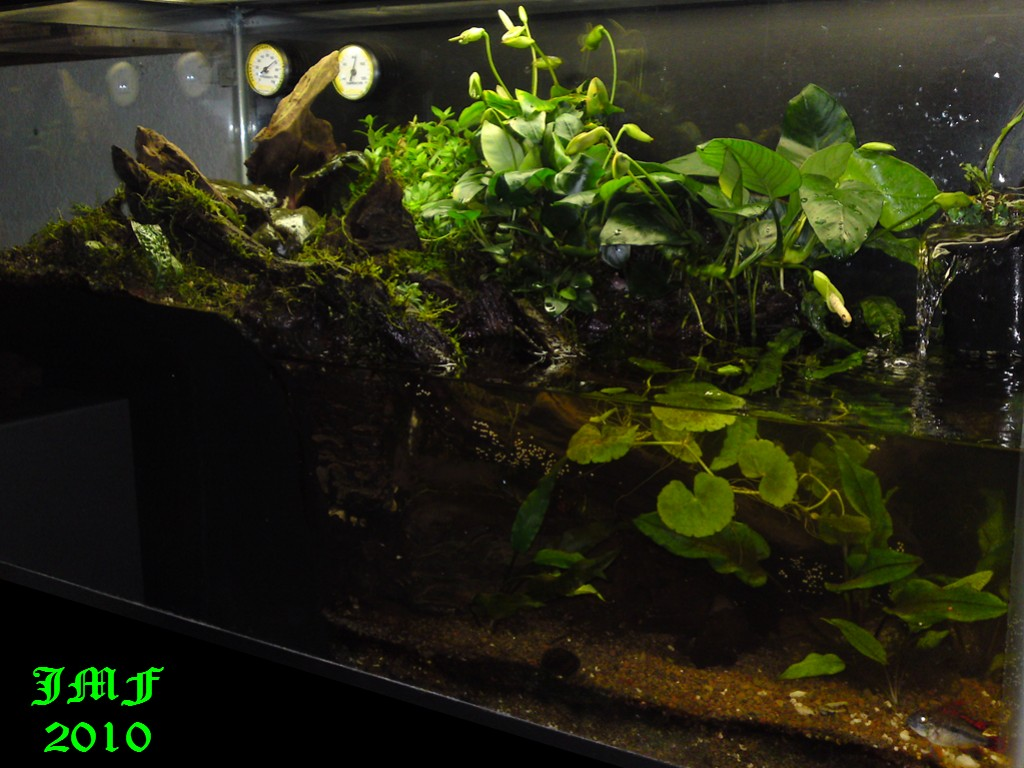 30 Gallon Paludarium: How to and Journal - Paludariums ... 10 Gallon Paludarium
