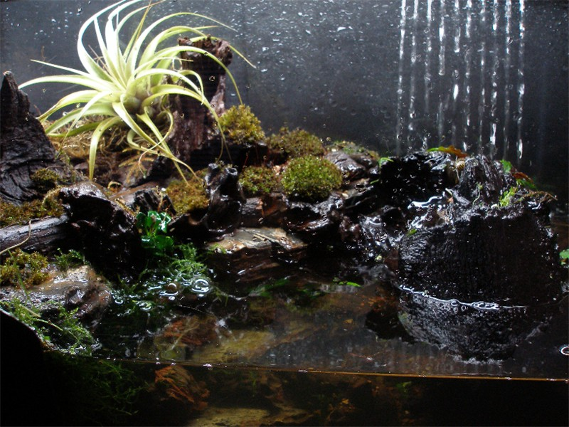 how to get my aquatic plants to grow